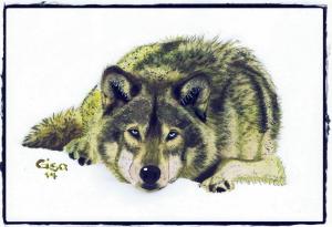 Wolf 1_1000